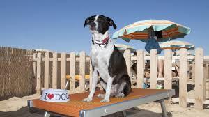 spiaggia per animali d\'afezione